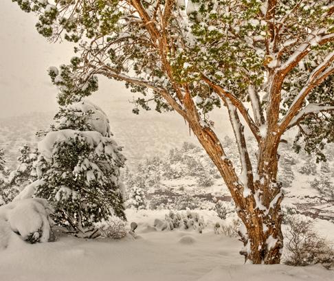 _dsc3450_1_2_3_4_sedona-snow-crop.jpg