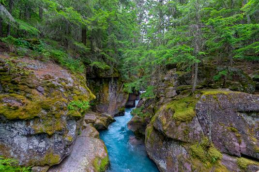 _dsc3100_1_2_3_4_gnp-trl-cedars-avalanche-creek.jpg