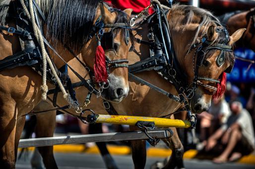 c_dsc6768_stampede-parade.jpg