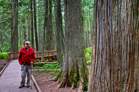 gnp-_dsc2980_1_2_3_4_gnp-trail-of-the-cedars-brad.jpg