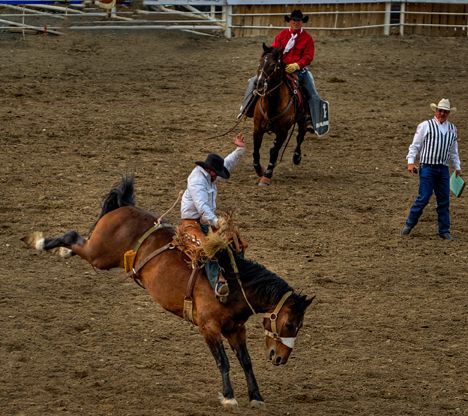 r_dsc7794_stampede-rodeo-crop2.jpg