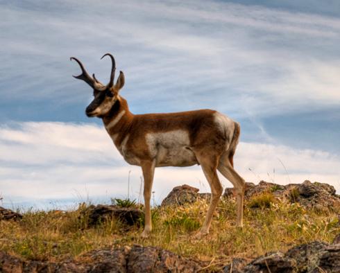dsc_9443_natl-bisson-range-antelope-crop.jpg