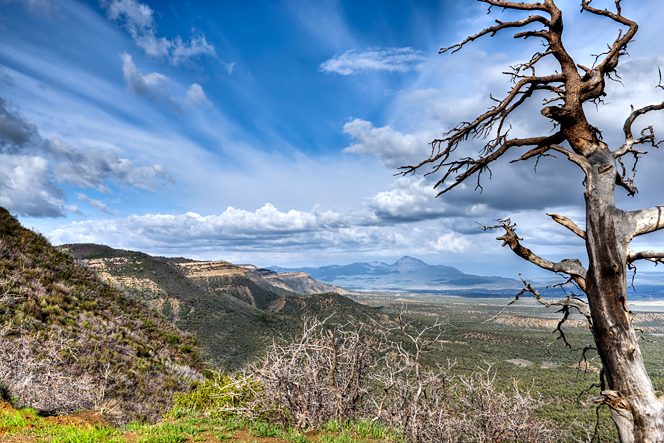 DSC_9992_3_4_Mesa-Verde-snag-grad