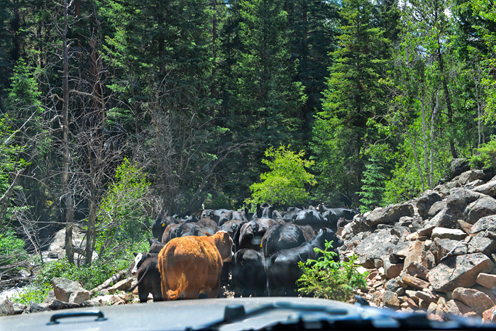 DSC_5216-Lottis-Creek-talus-cow-jam