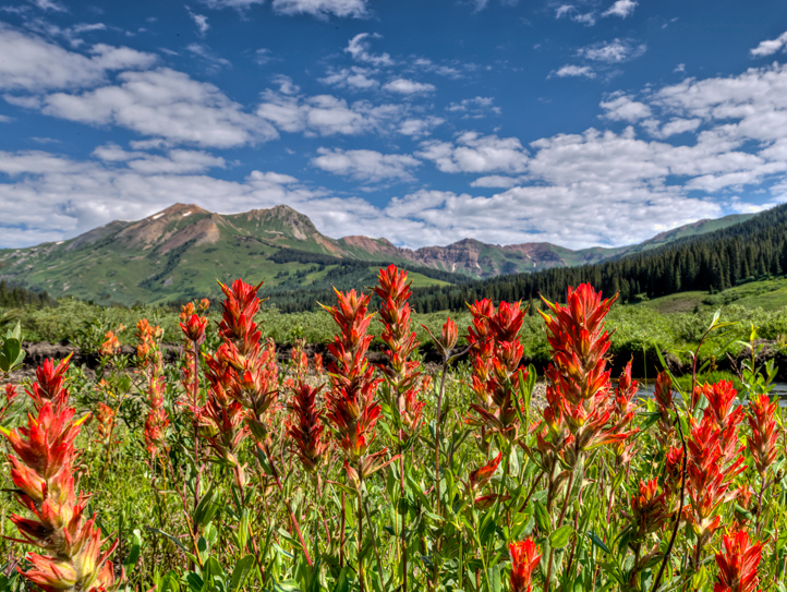 DSC_6002_3_4_2013-07-09-CBWF-Gothic-Snowmass-Mtn-paintbrush-crop