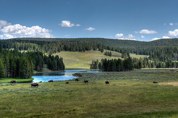 _DSC8857_8_9_2014-08-11-Yellowstone-Hayden-Valley