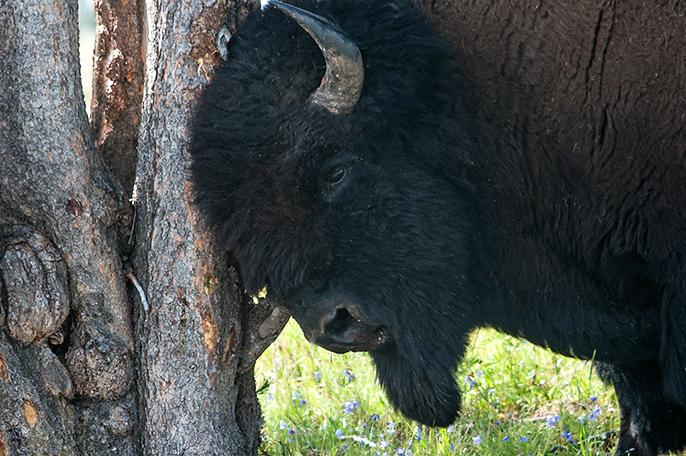 DSC_6379-2014-08-11-Yellowstone-Rvr-Hayden2
