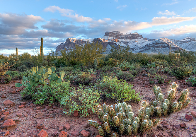 _DSC1085_6_7_2015_01_01-Superstitions-am-2-snow