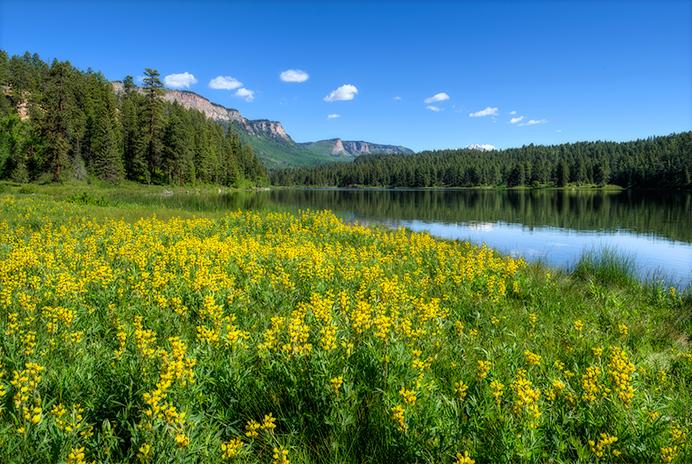 _DSC4670_1_2_2015-06-14-Lake-Haviland-Wildflower-ortonr