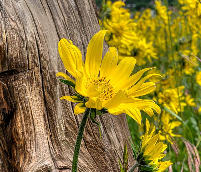 _DSC7082_3_4_2015-07-13-CBWF-Wildflower-Landscape-Wshington-Glch