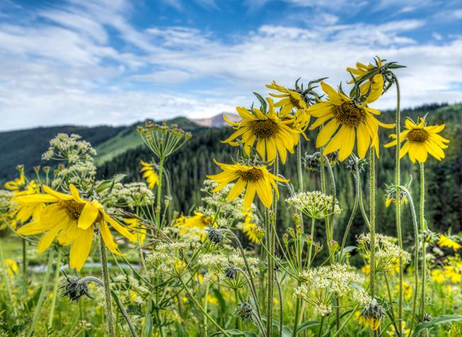_DSC7227--8--9-2015-07-13-Evening-of-Wildflowers-Washington-Gulch