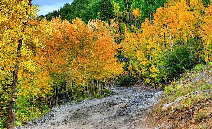 _DSC0498_499_500_2015-09-13-Mineral-Creek-aspen-final