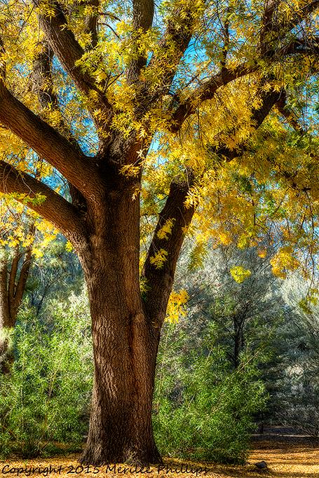 _DSC3216_7_8_2015-12-2-Boyce-Thompson-Arboretum-ortn